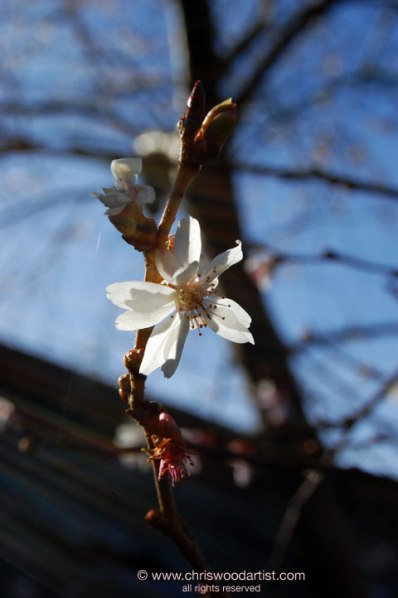 blossom72webflat