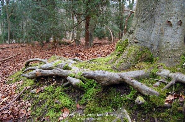 treerootqecp72web