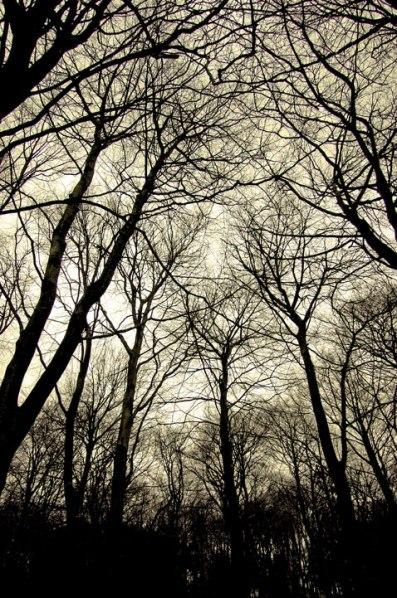 treesyellowfilter72web